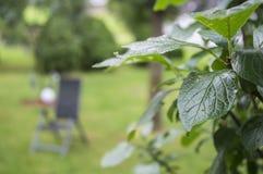 Las hojas del árbol en el fondo Fotos de archivo libres de regalías