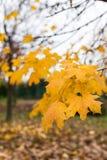 Las hojas del último Foto de archivo