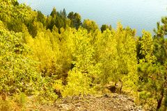 Las hojas del abedul amarillo en otoño Imagenes de archivo