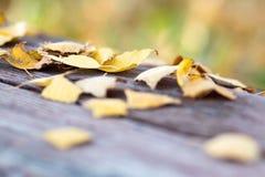 Las hojas del abedul amarillo han caído en el banco Imagenes de archivo
