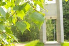 Las hojas del abedul en un fondo de la capilla, erigido en memoria de voluntarios españoles Colina de Poklonnaya Imagen de archivo