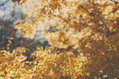 Las hojas del amarillo del otoño empañaron el fondo Fotos de archivo