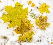 Las hojas del amarillo mintieron en nieve en la estación del invierno Fotografía de archivo