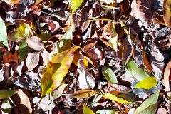Las hojas del amarillo del otoño se derramaron hacia fuera en la tierra imágenes de archivo libres de regalías