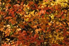 Las hojas del automn Imagenes de archivo