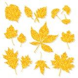 Las hojas del brillo del otoño fijaron en el vector blanco del fondo Foto de archivo libre de regalías