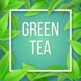 Las hojas del fondo natural del té verde imágenes de archivo libres de regalías