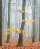 Las hojas del otoño pasado foto de archivo