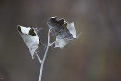 Las hojas del otoño pasado Fotografía de archivo libre de regalías