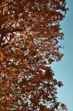 Las hojas del rojo Imágenes de archivo libres de regalías
