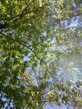 Las hojas del verde foto de archivo
