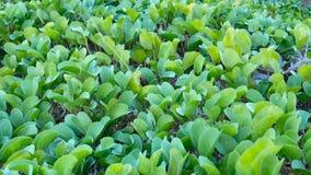 Las hojas del verde con suavemente enrollan almacen de metraje de vídeo