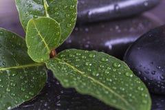 Las hojas del verde cubiertas por el agua caen en piedras negras Fotos de archivo libres de regalías