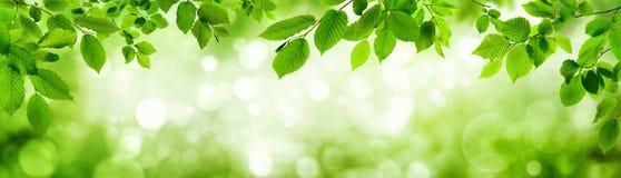 Las hojas del verde y los puntos culminantes borrosos construyen un marco Imagen de archivo