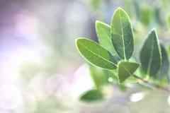 Las hojas delicadas destacaron en un fondo borroso brillante con el espacio del texto imagenes de archivo
