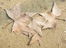 Las hojas en el camino Fotografía de archivo