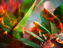 Las hojas en el fuego Imágenes de archivo libres de regalías
