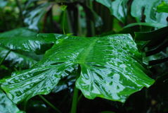 Las hojas en el jardín Fotografía de archivo libre de regalías