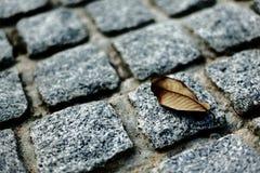 Las hojas en fondo de las rocas Foto de archivo libre de regalías