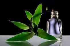 Las hojas en la botella en el fondo negro, luz a través de las hojas verdes Imagen de archivo
