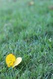 Las hojas en la hierba Imagen de archivo libre de regalías
