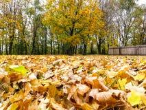 Las hojas en la tierra Foto de archivo