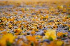 Las hojas en la tierra Fotografía de archivo libre de regalías
