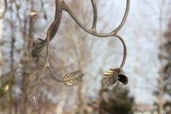 Las hojas en las ramas Imagen de archivo libre de regalías