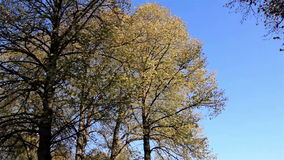 Las hojas en los árboles movieron debido al viento almacen de metraje de vídeo