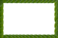 Las hojas enmarcan el fondo blanco Foto de archivo libre de regalías