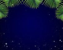 Las hojas enmarcan en las estrellas en el cielo nocturno Foto de archivo