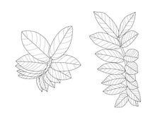 Las hojas esquel?ticas alinearon dise?o en el vector blanco del ejemplo del fondo libre illustration