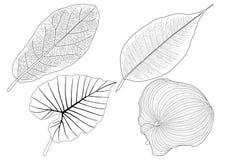 Las hojas esquel?ticas alinearon dise?o y la l?nea negra stock de ilustración