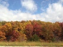 Las hojas están cayendo Imagen de archivo libre de regalías