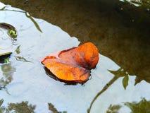 las hojas flotan en el agua Fotos de archivo libres de regalías
