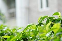 Las hojas fuera de la casa Fotografía de archivo