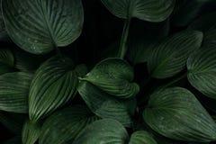 Las hojas grandes de la planta floreciente Foto de archivo libre de regalías