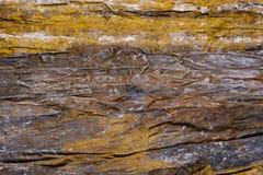 Las hojas grandes son alga marina secada del quelpo para envolver y salud Foto de archivo libre de regalías