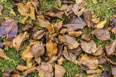 Las hojas hermosas ajardinan lleno de color del pueblo de Sirnea adentro fotos de archivo