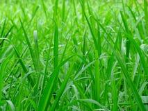 Las hojas largas se chiban el fondo, tiempo brillante verde del día del color Foto de archivo libre de regalías
