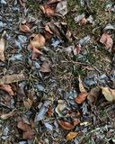 Las hojas muertas fotografía de archivo