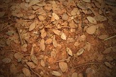 Las hojas muertas tiraron el ideal para los fondos Foto de archivo libre de regalías