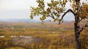 Las hojas rojo-inclinadas de oro agitan en el viento en un bosque otoñal al lado de un valle almacen de metraje de vídeo