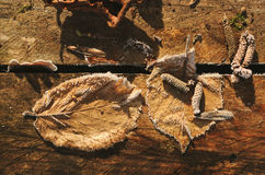 Las hojas se descoloraron en los tableros de madera Fotos de archivo libres de regalías