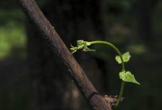 Las hojas se exponen al sol Fotografía de archivo libre de regalías
