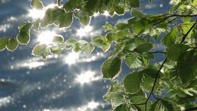 Las hojas se reflejan en el agua metrajes