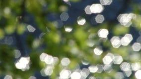Las hojas se reflejan en el agua almacen de video
