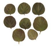 Las hojas secadas de la caída de plantas, de flores y de ramas aislaron el eleme Imagen de archivo