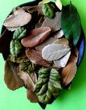 Las hojas secas fotos de archivo libres de regalías