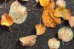 Las hojas secas caidas con lluvia caen en ellos Imagenes de archivo